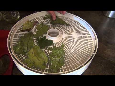 My Simple Kale Chip Recipe
