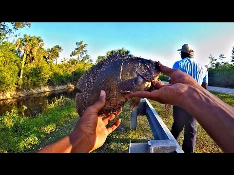Freshwater Fishing: Giant Oscars, Cichlids, Catfish, Tilapia And Gar In Florida