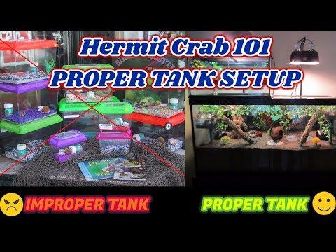 Hermit Crab 101: Proper Tank Setup!