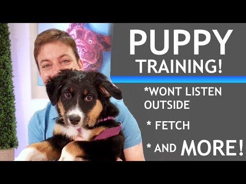 If Your Puppy Won't Pay Attention, Here's What To Do!