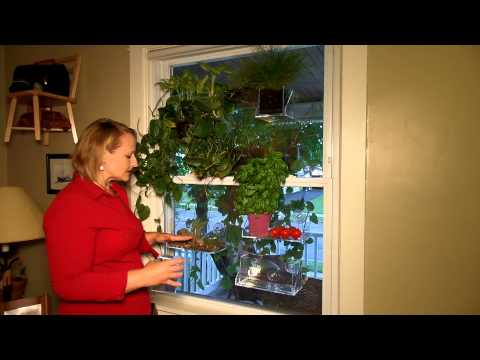 Living Ledge Vertical Garden Container Walmart Get on the Shelf Contest Demonstration