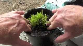 How To Regrow Herbs From A Supermarket