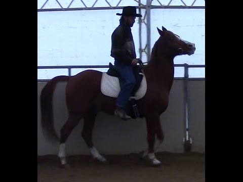 Teaching the High Headed Horse to lower his head under saddle with Mike Hughes, Auburn California