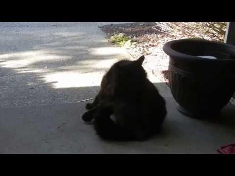 Injured Stray Kitty