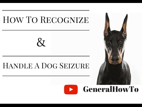 How To Recognize And Handle A Dog Seizure