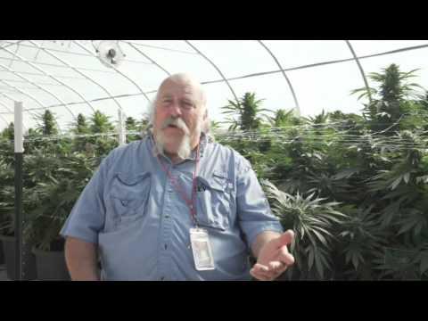 Best Marijuana Trimmer