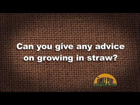 Q&A – Any advice on growing plants in straw?