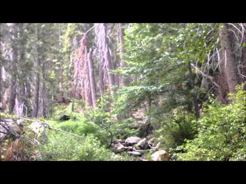 Golden Trout Wilderness -