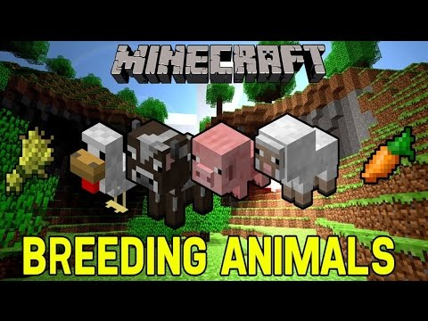 MineCraft Feeding and Breeding Animals | Chickens Cows Sheep Pigs