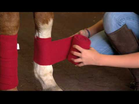 Equestrian Neightion: How To Wrap a Horse with Polo Wraps