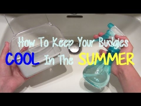 How To Keep Your Budgies Cool In The Summer!