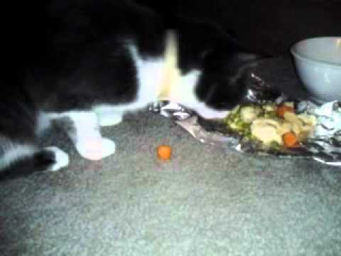 Kitty eats chicken pot pie