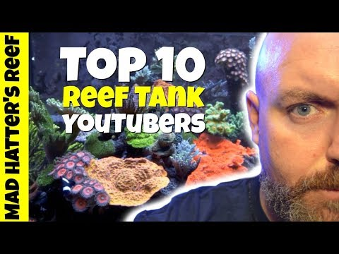 Top 10 Reef Tank YouTubers