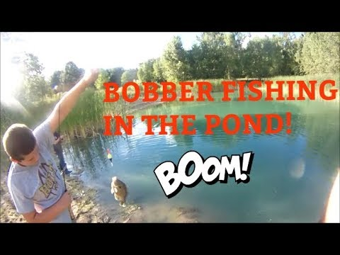 Bobber fishing for Yellow Perch and BIG Bluegill in a small pond