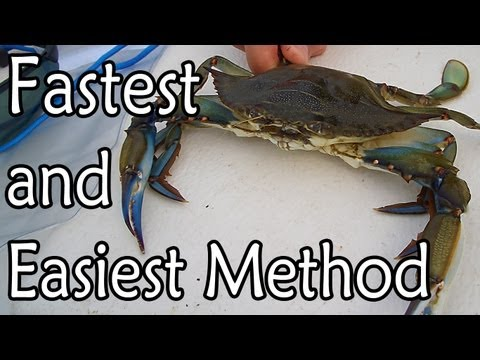 How to Clean a Blue Claw Crab