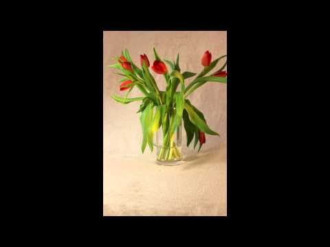 Miracle tulip revival! - Time lapse
