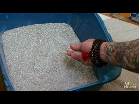 Important Lessons on Kitty Litter | My Cat From Hell