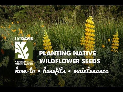 Planting Native Wildflower Seeds