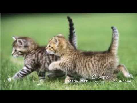 Cute cats for sale