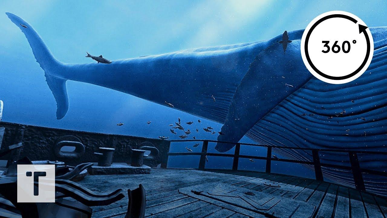 the Blu: Whale Encounter   3D 360 VR