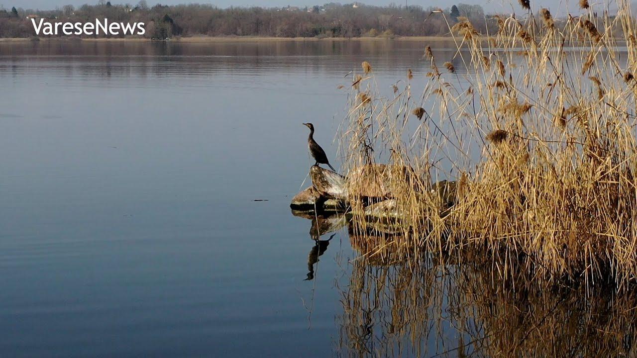 Alla scoperta di Cazzago Brabbia: natura, pescatori e artisti sul Lago di Varese