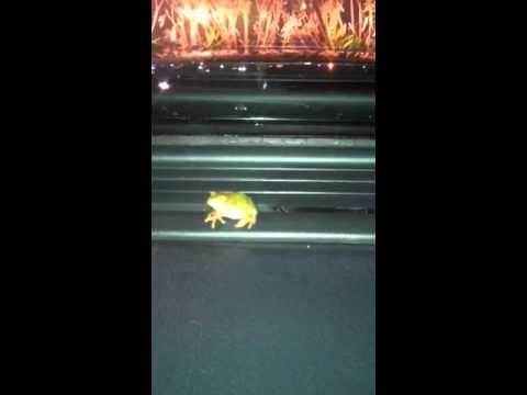 A frog got inside of my car through the A/C vents