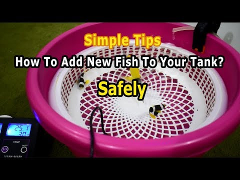 How To Add & Acclimate a New Fish To Your Tank? Simple Tips (HOW TO Setup & Cycle Reef Tank)