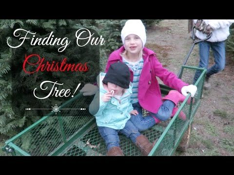 OUR HUNT FOR THE PERFECT TREE! (A VLOG)