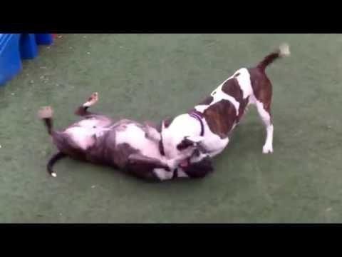 Zena and Donavan - KCPP Dogs