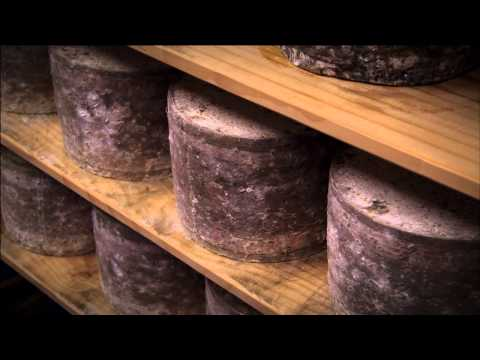 Raw Milk New Zealand Cheese Documentary. Preview of Cheese Slices/ Cheese Chasers Season 7