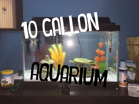 Setting Up My 10 Gallon Fish Tank!
