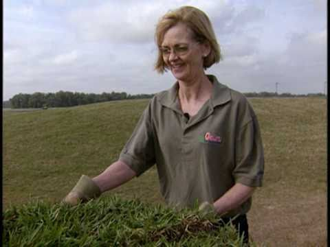 Your Florida Lawn - Laying Sod