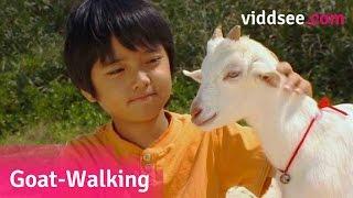 Goat-Walking - It