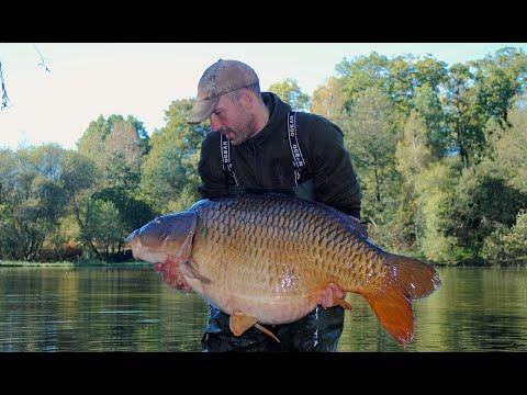 Monster carp of 83lb (37.6kg) caught on a 9ft Nash Scope rod