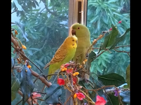How to Keep Birds Indoors Cage Free (2/2)