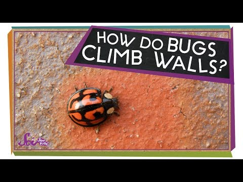 Viewer Mail! - How Do Bugs Hang Upside-Down?