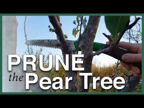 Prune your fruit trees with confidence!
