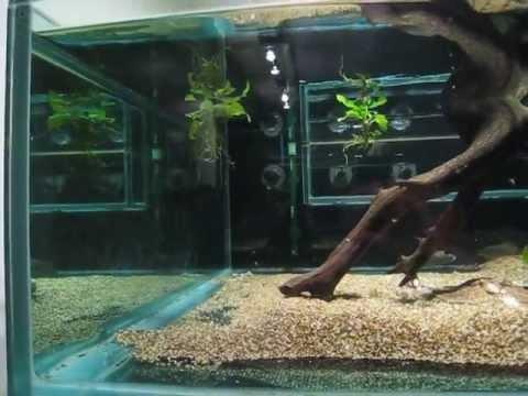 Crystal Clear Water in Aquarium Tanks
