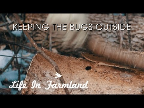 Tips On Keeping Bugs Out Of Your Firewood - WHW - EP:19