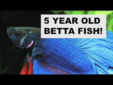 Fish Friday| Senior Betta Care🐟