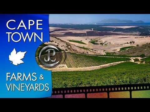 Farm & Vineyard just outside Cape Town, Western Cape.