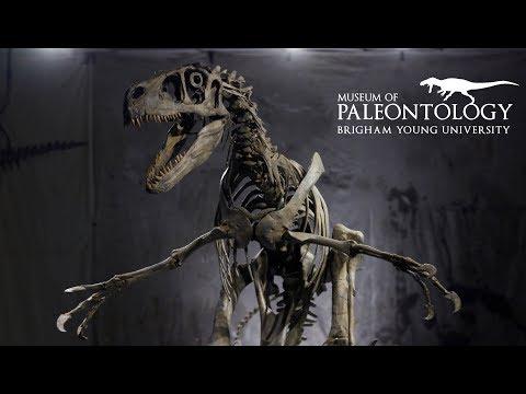 Utahraptor at the BYU Museum of Paleontology