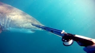 Great White Comes too Close - FULL STORY