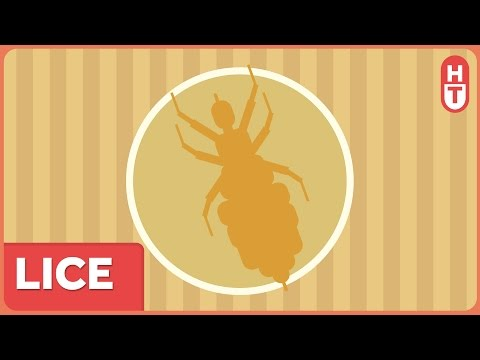 Lice! They're Itchy, They're Tough to Kill, and They're Everywhere