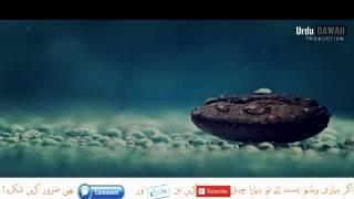 Maaf Karna Sekho By Molana Peer Zulfiqar Naqshbandi Short Bayan