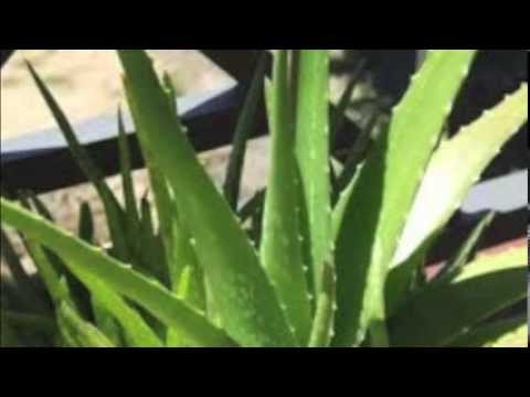 Aloevera Gel To Reduce Burn,Acne Marks,Tan and Pigmentation