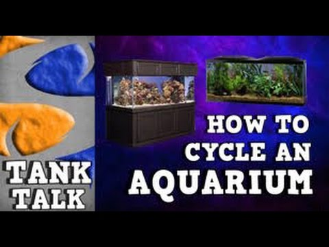 HOW TO CYCLE AN AQUARIUM TANK TALK Presented by KGTropicals