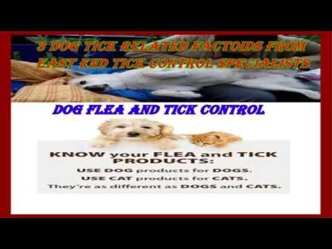 Dog Ticks -  dog flea and tick control