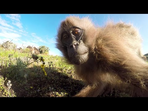 GoPro: Playing Around with Monkeys in Africa