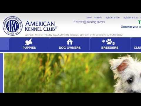 How-To AKC Register A Dog